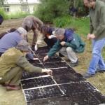 [Grécia] Criação de um sementeiro auto-organizado na área do antigo aeroporto de Atenas