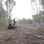 [Rússia] Ataque incendiário contra máquina de desmatamento na Floresta de Khimki