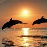 [Ucrânia] Ação Direta: Dois golfinhos são libertados do golfinário de Yevpatoria