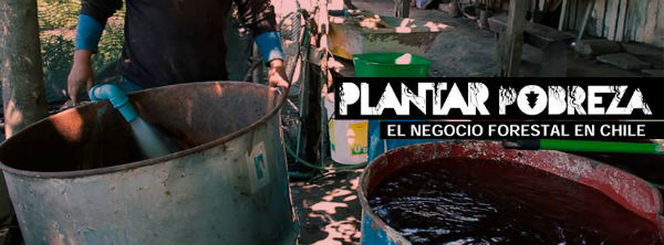 chile-documentario-plantar-pobre-1