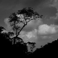[México] Segundo comunicado dos Individualistas Tendendo Para o Selvagem (ITS)