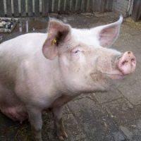 [Argentina] Uma vida resgatada de um lugar horrível: Ação da Frente de Libertação Animal