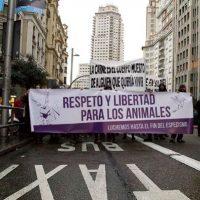[Espanha] Milhares de pessoas se molham pelos animais