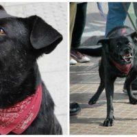 """[Chile] Morre o lendário cão """"Negro Matapacos"""""""