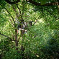 [Alemanha] Convocatória para defender o bosque de Hambach