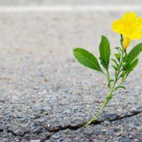 [Brasília-DF] Uma semente nas fissuras da pavimentação