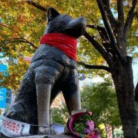 """Homenagem ao """"Negro Matapacos"""" no Japão: Estátua de Hachiko amanhece com lenço vermelho"""
