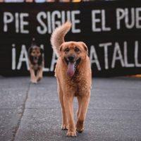 [Chile] Santiago: 35º dia de Revolta Social