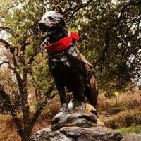 [EUA] Homenageiam em Nova York o cão ícone de manifestações no Chile