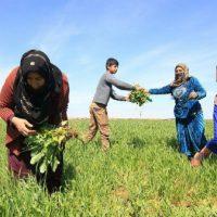"""[Rojava] """"Uma sociedade que não é capaz de defender sua saúde e cuidar dela nunca poderá ser livre"""""""