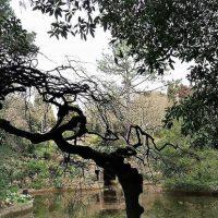 [Portugal] Qual é o nosso papel na Natureza?
