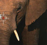 [Reino Unido] Pandemia acelera extinção das espécies: elefantes e girafas em risco