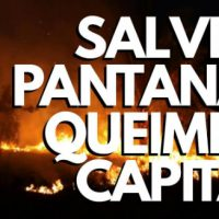 Vídeo | Salve o Pantanal: Queime o Capital!