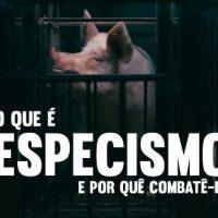 Novo vídeo: O Que é Especismo e por quê combatê-lo