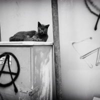 Levante sua cabeça. A virada autoritária de uma nova forma e a repressão anti-anarquista na Itália