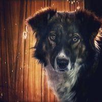 [Argentina] Um líder anarquista e um amor eterno: a história de Severino, o inesquecível cão da série Okupas