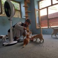 Ajude os Cães e Gatos do Afeganistão