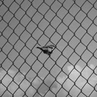 [Reino Unido] Companheiro encarcerado por sua participação no site 325.nostate.net
